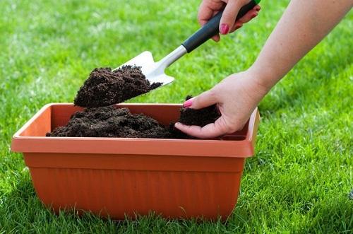 Компост богат минералами и бактериями, которые создают симбиоз с различными растениями. Это очень плодородная почва, в которой прекрасно растут любые растения и дают богатый урожай. Главное достоинство органического удобрения в том, что оно бесплатно и экологически чистое. Кроме того, имея компостер появляется место куда можно складывать органические остатки, а не вывозить их на свалку.