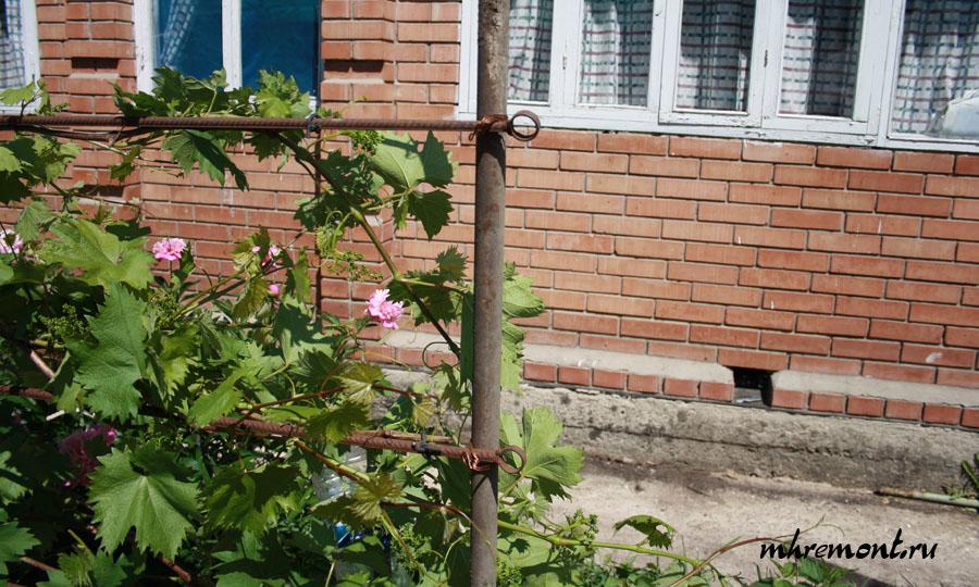 Изгородь для винограда своими руками 78